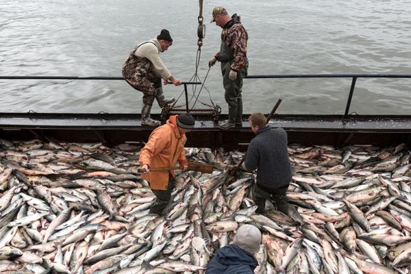 На Международном рыбопромышленном форуме обсудили вопросы рыболовства в условиях глобализации — Агентство Бизнес Новостей — Ремонт дома