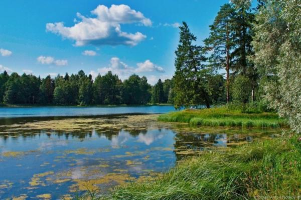 На реке Славянка в Петербурге обнаружили нефтяное пятно — Агентство Бизнес Новостей — Ремонт дома